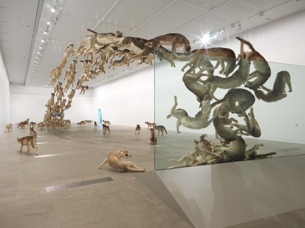 Installation view of Head On at the Gallery of Modern Art, Brisbane, 2013. Photo by Natasha Harth, courtesy Queensland Art Gallery   Gallery of Modern Art.