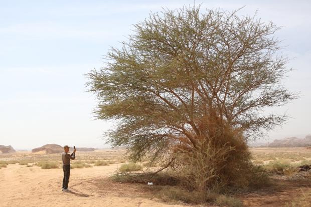 Cai Guo-Qiang photographing a tree in Mada'in Saleh, Saudi Arabia, 2013 Photo by Shu-Wen Lin, courtesy Cai Studio
